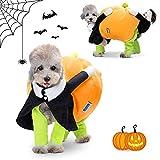 Nobleza - Disfraz de Calabaza y Payaso de Halloween para Perros, Disfraz Divertido De Gato, Disfraz de Cosplay Novedad Funny, Abrigo de Invierno cálido (XL)