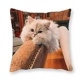 Cojín de gato persa – Pop Art – Funda de almohada individual – Sin relleno – 40 x 40 cm (solo funda)