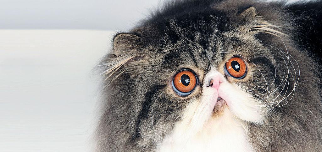 enfermedad gatos ojos
