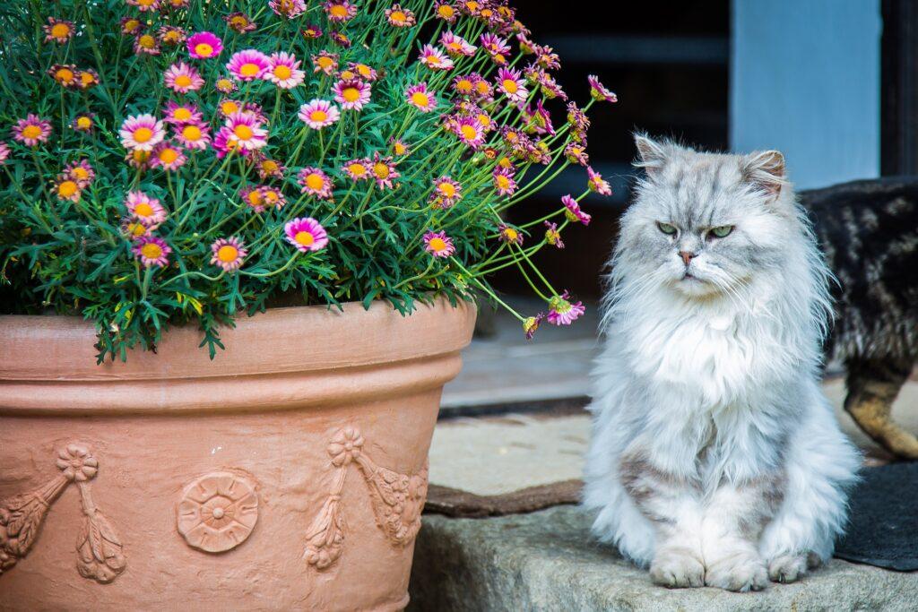 enfermedad de los gatos en los ojos