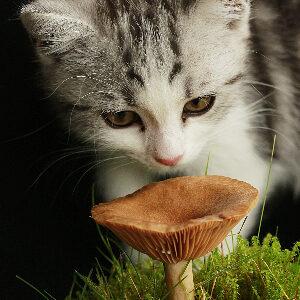cosas que no pueden comer los gatos