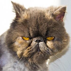 dieta para gatos con diarrea