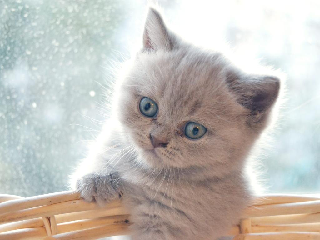 cuantos años vive un gato persa
