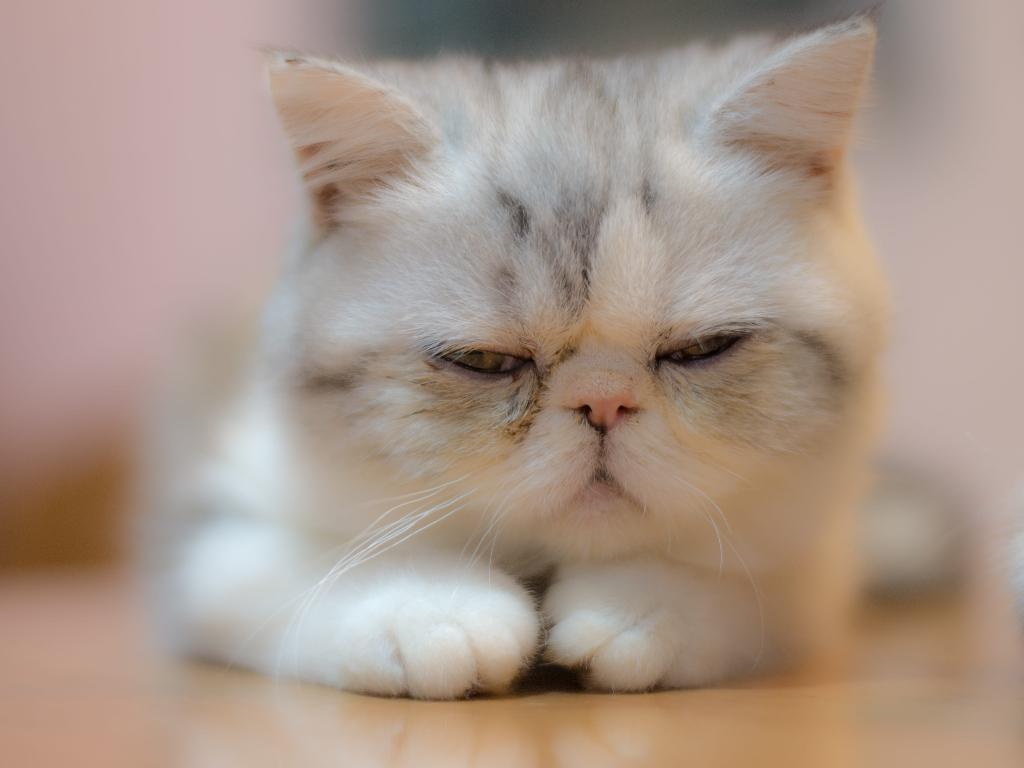 enfermedades respiratorias en gatos tratamiento