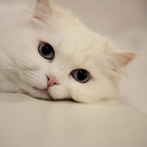 cómo saber si tu gato te quiere