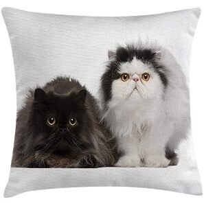 cojin gato negro