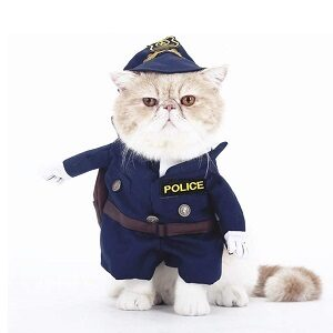 disfraz para gato