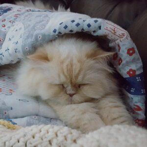 enfermedad en los gatos